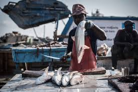 Tanzania to train fishiries expert from Somalia   Somaliland